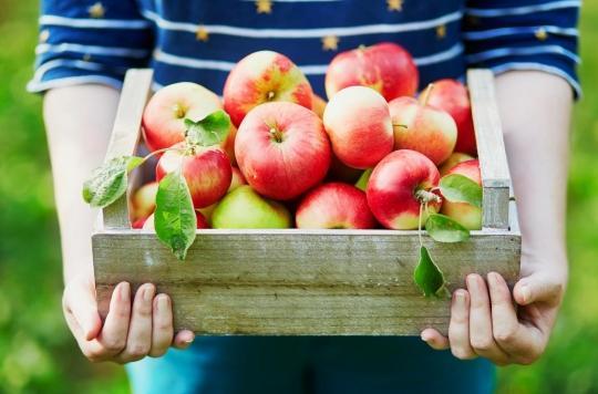 pommes bio excellentes pour la sante